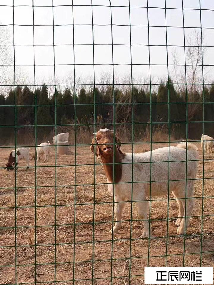 养殖围栏网价格及图片