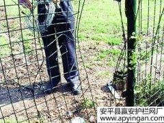 梅花山风景区的铁丝网护栏修复好了