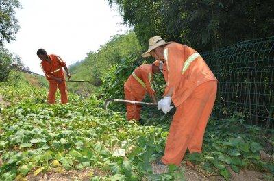 杭州对辖区路段公路用地范围内作物进行集中的