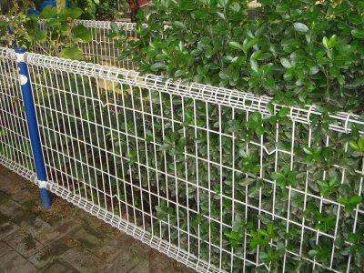 绿化护栏网
