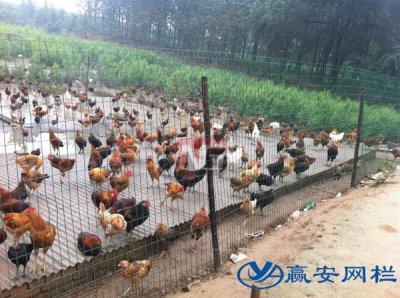 养殖用铁丝围栏网多少钱一米