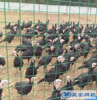 养鸡用铁丝网多少钱一卷