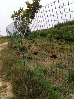 2米高养殖场护栏网项目案例