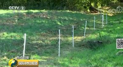 法国用电围栏网阻止非洲猪疫传播