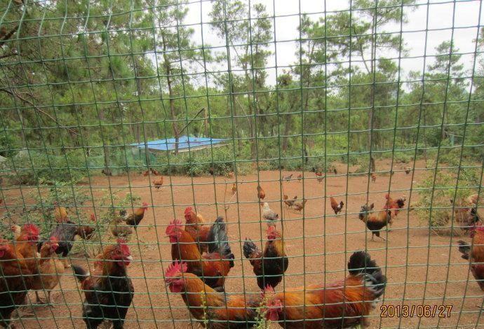 养殖围栏网5
