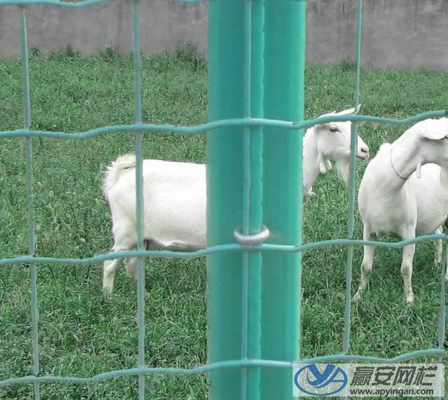 养殖围栏网1