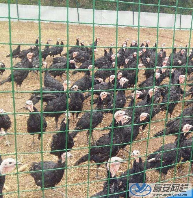 养殖场铁丝网