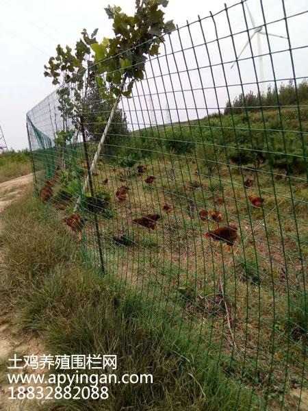 土鸡养殖围栏网