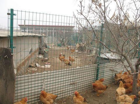 养鸡场围栏