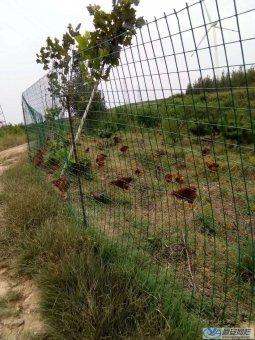 山林散养鸡场护栏网的主要功能和作用