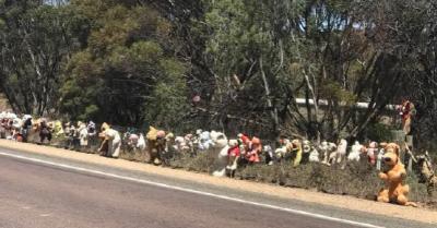 澳大利亚的泰迪熊围栏
