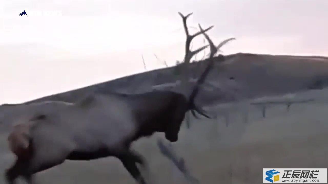 麋鹿围栏网