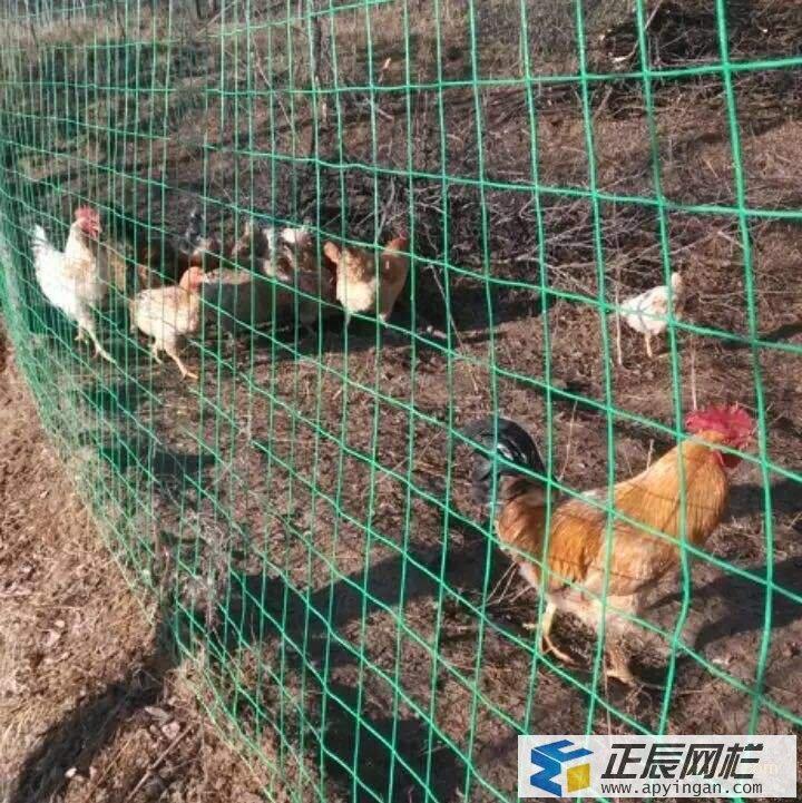 山地养土鸡围栏