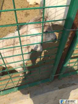 羊舍围栏网价格多少钱一米?