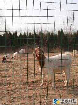 选购养殖围栏网不要太心急