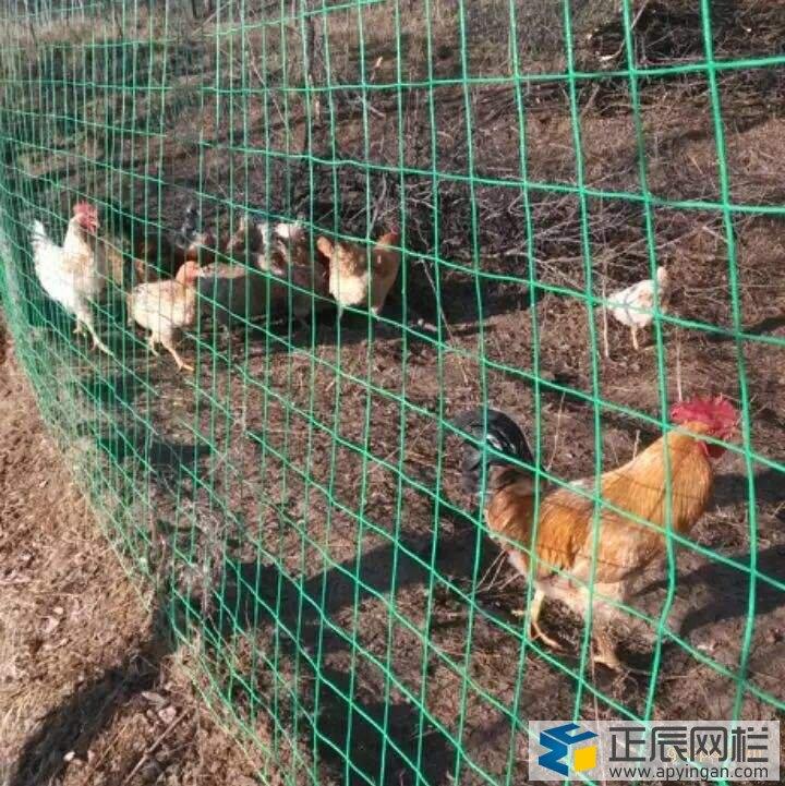 养鸡铁丝网围栏