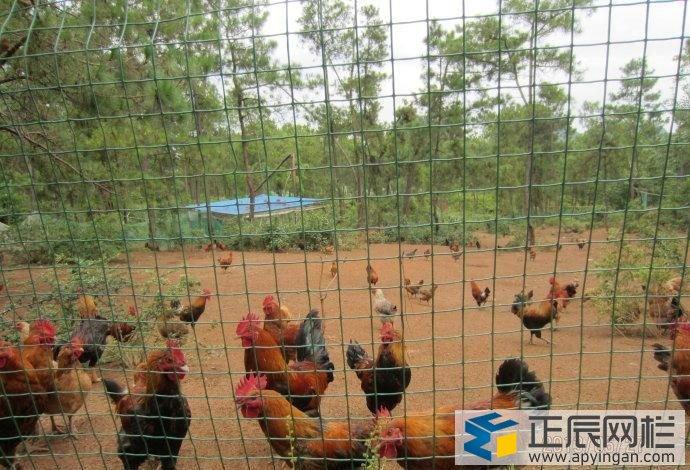 养鸡围栏铁丝网