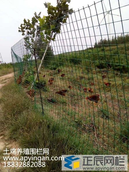 散养鸡围栏网
