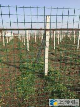 农场果园围栏网采用哪种铁丝网围栏合适耐用?