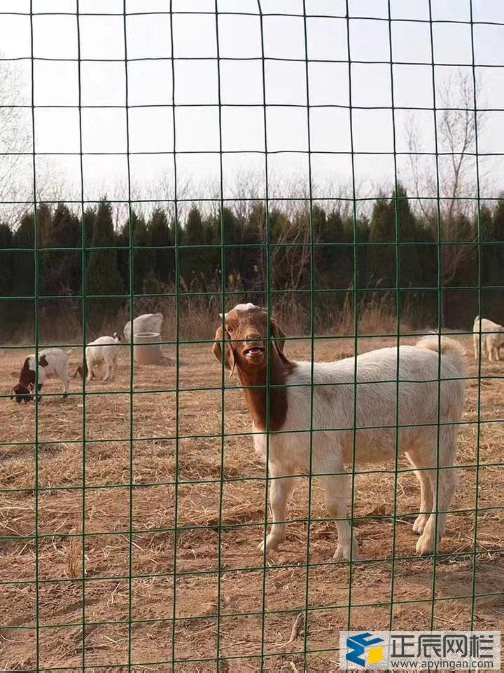养鸡养殖围栏网批发价格